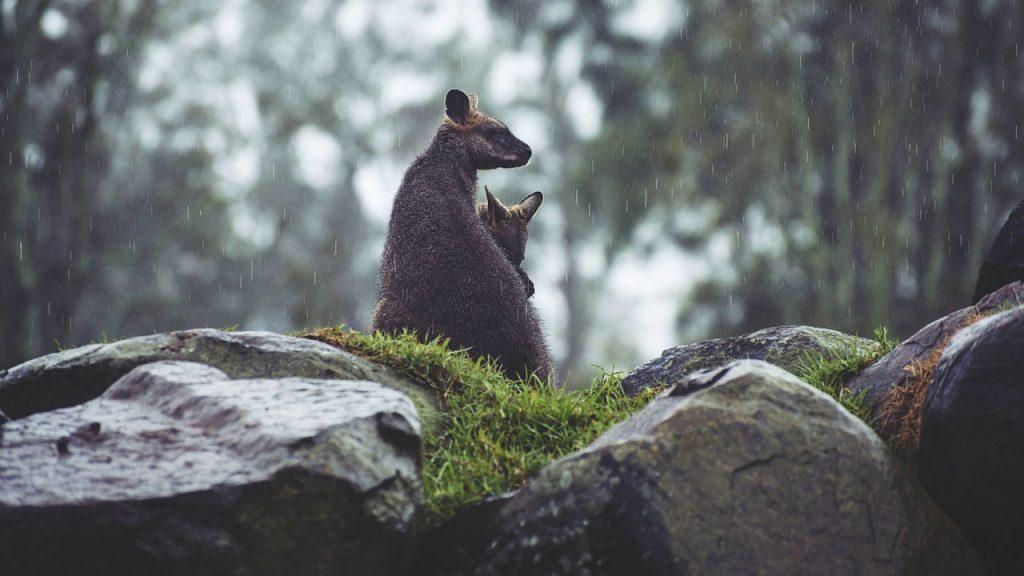 Австралия - страна овец и кенгуру. Серия рассказов для детей