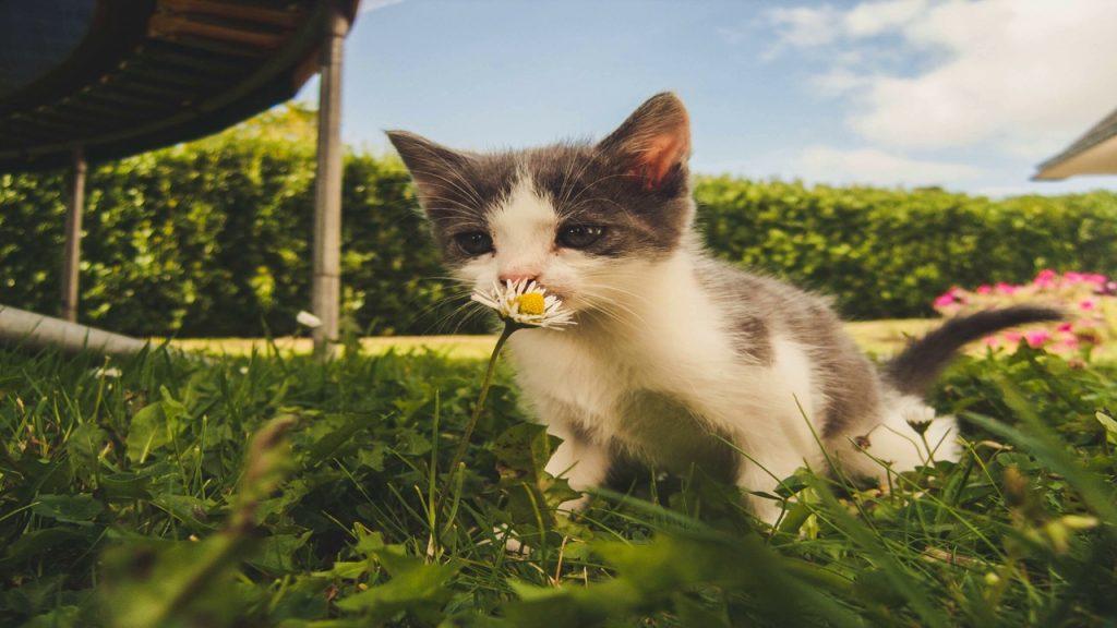 Котёнок по имени Никто