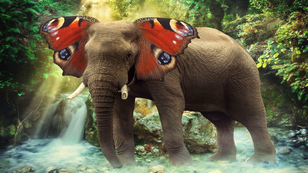 Слон, который хотел стать бабочкой