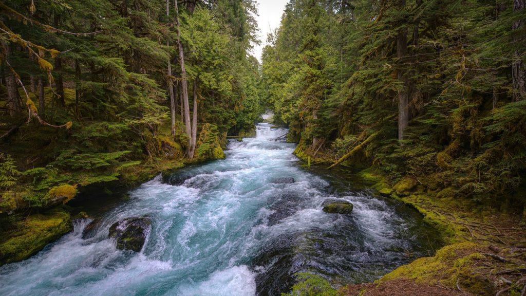 Зачарованный лес. Река Истины. Часть 3