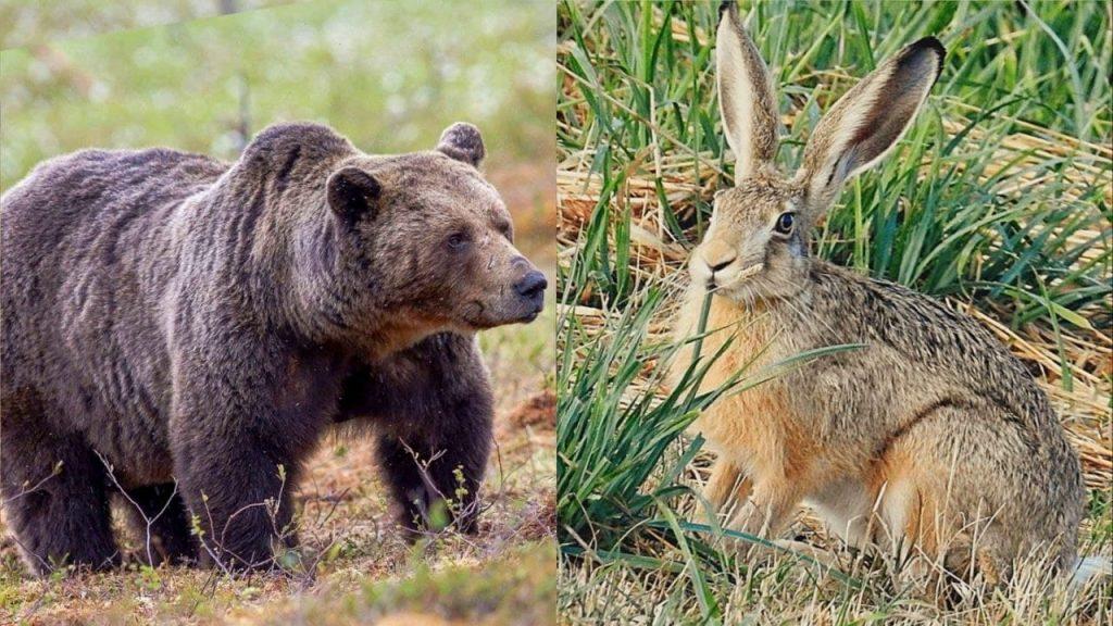 Как медведь и заяц место делили
