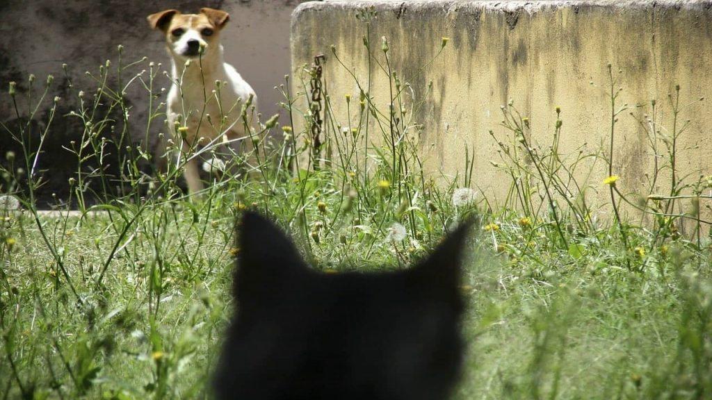 Почему кот и собака друг друга не любят