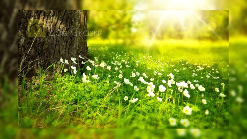 Почему трава зелёного цвета?