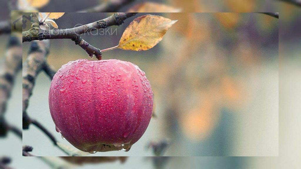 Сказка про яблоко и белку