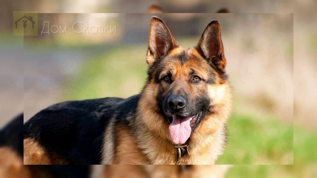 Служебный пёс Иваныч
